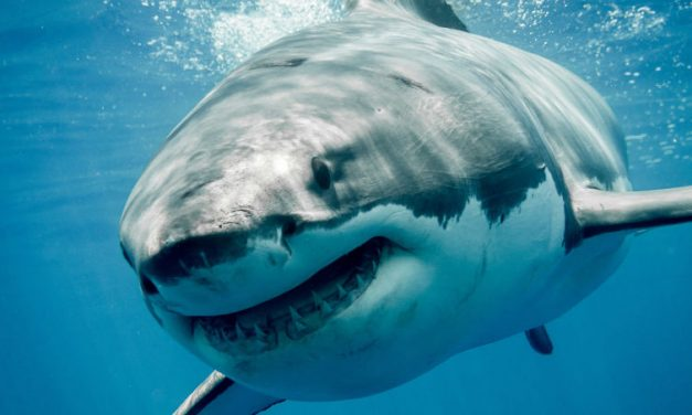How much risk can you handle: On sharks and skiing.