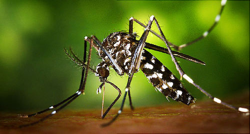 Mosquitoes driving you buggy? Me, too.